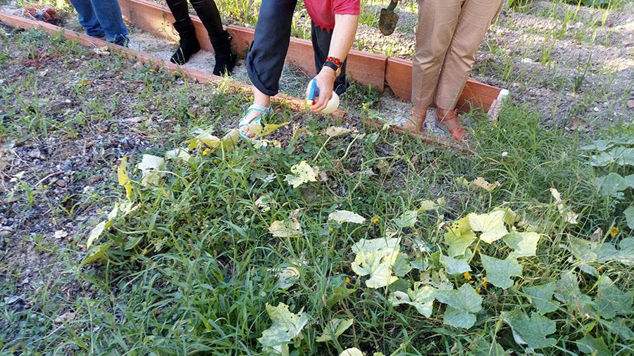 La UCAV participa en el Fascinatios of Plants Day organizado por EPSO