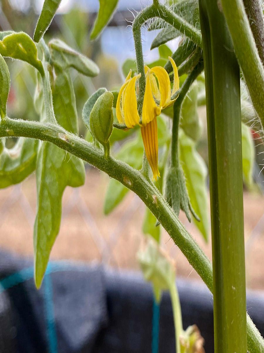 Agrocampus 2030, el proyecto de la UCAV que plantea un huerto ecológico como herramienta didáctica
