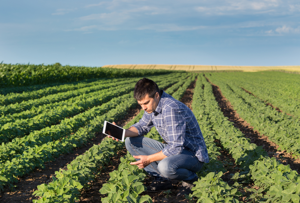 Young,Handsome,Agriculture,Engineer,Squatting,In,Soybean,Field,With,Tablet