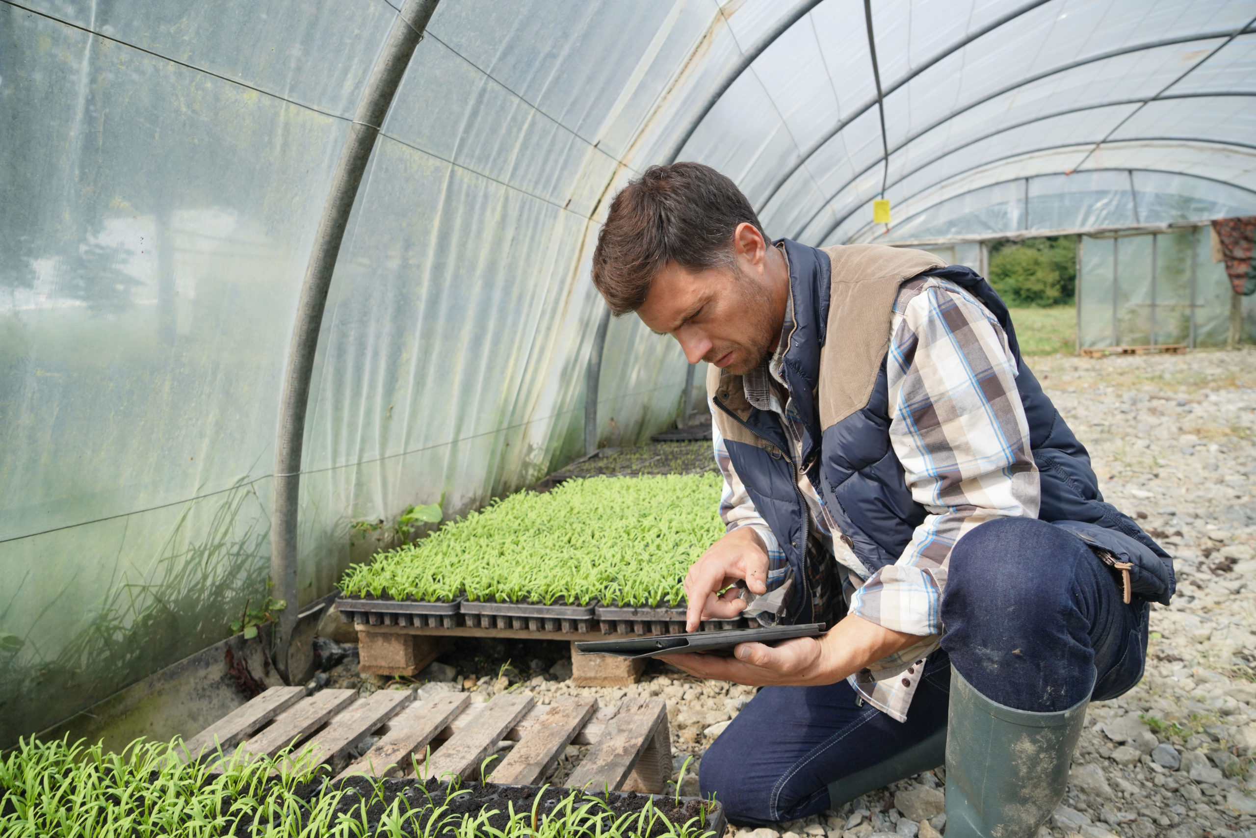 Agricultural,Engineer,In,Greenhouse,Checking,Vegetables,Plants